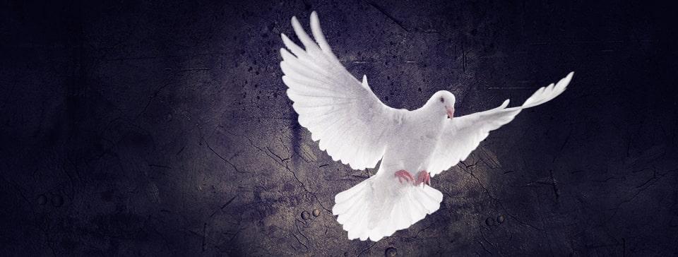 世界人類が平和でありますように